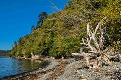 MuirCreek4 (SarahBK Photography) Tags: beach britishcolumbia d5000 erosion landscape layers macro muircreek nature nikon outdoors pacificocean rocks shell summer