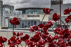 Wave III (andyrousephotography) Tags: salfordquays imperialwarmuseumnorth iwmn quaystheatre lowrytheatre poppies wave weepingwindow sculptures ceramics handmade paulcummins tompiper firstworldwar ww1 centenary