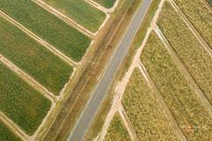 20180702-DJI_0877-Edit-Edit20180702.jpg (Phil Copp) Tags: rollingstone drone djimavic paradisepines djimavicpro crop patterns dronephotography farming aerial pineapples northqueensland dji