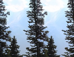 Mt Robson Through Trees 2 (ubernatural) Tags: mtrobson berglake camping backpacking hiking bc canada stphmkre stereophotomaker crossviewstereo 3d mountain
