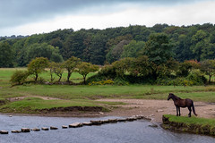 Ogmore stepping stones (Keith in Exeter) Tags: ogmore wales river steppingstones crossing horse animal water rock landscape tree forest grass valley gorse sky