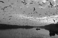 Yamuna Ghat (Rk Rao) Tags: bw blackandwhite yamunaghat texture places boat yamunariver river human monochrome people portrait fineart fineartphotography art artistic travel incredibleindia beauty design friends naturallight rkrao radhakrishnaraoartist rkclicks delhi india bird water sky sea