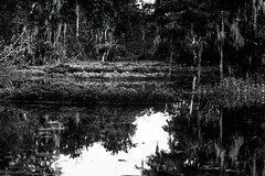 Swamp Scene Louisiana (_Lionel_08) Tags: swamp landscape louisiana bayou cajun black white gray wildlife water trees forest reflection