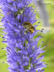 Flower bokeh, Poiana Braşov (cod_gabriel) Tags: flower floare dof depthoffield shallowfocus shallowdof bokeh insect insectă poianabraşov schulerau