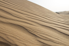 Dunes & Sand / UEA (Piotr Kowalski) Tags: dubai uae unitedarabemirates emirates dunes sand piasek pustynia dubaj emiraty wakacje summer activity