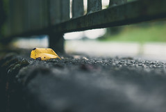 Lonesome (Eckehard Straßweg) Tags: autumn lonsesome einsam leica natur nature herbst stein outdoor autumnleaves yellow bokeh leicam9