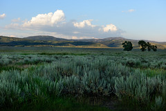 Sunset Grand Teton (winston.chou) Tags: grandteton sunset meadow grass trees mountain clouds bluesky