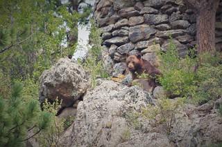 Brown Bear Brown Bear