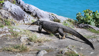 The Dragon of Racha island