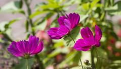 Flowers. (ost_jean) Tags: nikon d5200 tamron sp 90mm f28 di vc usd macro 11 ostjean
