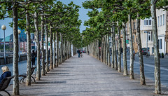 2018 - Germany - Düsseldorf - Rhine River Promenade (Ted's photos - Returns Late November) Tags: 2018 cropped düsseldorf germany nikon nikond750 nikonfx tedmcgrath tedsphotos vignetting dusseldorfgermany walkway pathway bike bicycle trees