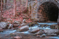 Tunnel Culvert #2 (tclaud2002) Tags: culvert tunnel water stream mountianstream whitewater waterfall rocks trees fallfoliage fallcolors outdoors nature mothernature northcarolinatopton usa