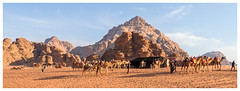 Camel Drive - Wadi Rum, Jordan (TravelsWithDan) Tags: camels desert wadirum jordan middleeast sand animals handlers cameldrive candid canong3x landscape
