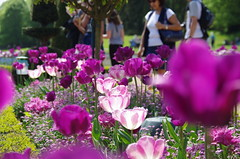 JLF14565 (jlfaurie) Tags: maintenon château castillo palace 22042018 jardin garden tulipes tulipanes tulips mechas gladys amigos friends michel magda sergio primavera printemps pentaxk5ii mpmdf jlfr jlfaurie spring flowers flores fleurs agua eau water canal intérieurs interiores inside