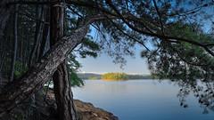 Somewhere over Nottely Lake (Charles Opper) Tags: canon georgia nottelylake summer color landscape nature pinetrees tress water lake bark rocks