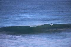 IMG_3654 (gervo1865_2 - LJ Gervasoni) Tags: surfing with whales lady bay warrnambool victoria 2017 ocean sea water waves coast coastal marine wildlife sealife blue photographerljgervasoni
