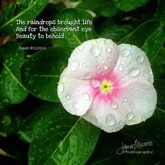 260/365 - Daily Haiku: Raindrops (James Milstid) Tags: dailyhaiku haikuaday haiku haiga poetry jemhaiku raindrops