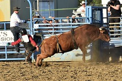 "Baker County Tourism – basecampbaker.com 47205 (Base Camp Baker) Tags: oregon ""easternoregon"" ""bakercountytourism"" basecampbaker ""basecampbaker"" ""bakercounty"" rodeo cowboys ""bakercitybroncandbullriding"" ""bakercity"" ""oregonrodeo"" ""minersjubilee"" oregonrodeo ramrodeo traveloregon travel tourism roughstock rodeolife bulls bullriding"