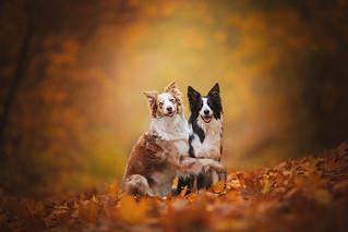 Autumn Friends!