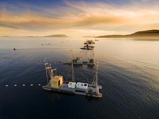 Reefnet Salmon Fishing Off Lummi Island