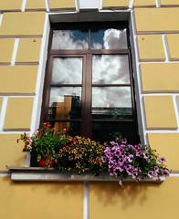 20180703_105210 (craetchecopar) Tags: russia saint peter mirror window flower reflect sky symmetry