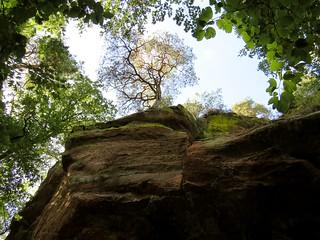 Altschlossfelsen - Tree at the top seen from below