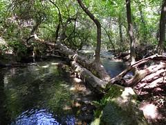 Krushuna stream near its spring, Maarata Nature Park, Bulgaria (cod_gabriel) Tags: krushuna maarata krușuna bulgaria stream râu forest pădure padure deciduous deciduousforest păduredefoioase крушуна