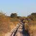 Sandy Track, Okavango Delta, Botswana