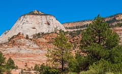 Desert Southwest, USA (itcho_ittan) Tags: usa2018 utah zionnp zion zionnationalpark