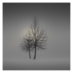 Deep in the Fog (Vesa Pihanurmi) Tags: trees foggy mist dark grey branches minimalism minimalistic winter snow