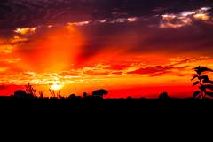Puesta de sol de septiembre (ameliapardo) Tags: puestasdesol cielorojo nubes sol fujixt1 sevilla andalucía españa