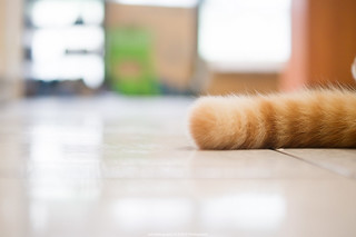 台北寵物攝影 到府拍攝 COLD Photography
