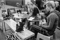 meeting the blind rescue cats  #417 (lynnb's snaps) Tags: 201808 35mm cv21mmf4ltm ilfordfp4 leicaiiic manly xtol bw blackandwhite cafe cats film fp4 street manlyvillage sydney australia 2018 cute bianconegro blackwhite bianconero biancoenero blancoynegro noiretblanc monochrome ishootfilm leicafilmphotography cv35mmf25colorskoparltm rangefinderphotography barnack ©copyrightlynnburdekinallrightsreserved