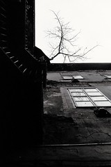 (Réka Fekete 993) Tags: budapest windows tree building blackwhite analog