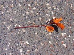 (anaritaperalta) Tags: asfalto planta abtracto contraste
