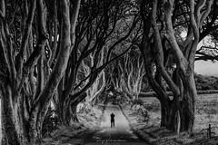 Dark Hedges (rajaramki) Tags: ireland northernireland darkhedges uk bw blackwhite