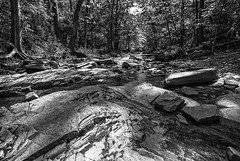Flowing with the Light (daveanderson14) Tags: bw blackandwhite blackwhite landscape forest creek rocks trees water reflections nikond610