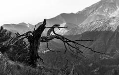 Plomb. (Canad Adry) Tags: france alpesmaritimes sony e pz 18105mm g oss landscape mountain nature noir et blanc monochrome black white bw tree dead wood bois mort alps alpes mercantour