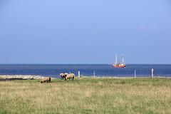 Otterndorf (patro1986) Tags: nordsee northsea sea meer strand kutter schafe wasser deich otterndorf otterndorferstrand wattenmeer elbe elbmündun himmelblau horizont