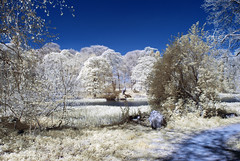 The loch-side walk (Elisafox22) Tags: elisafox22 nikon d80 infraredconverted 590nm supergoldie trees loch sky water reeds walk path fauxcolour infrared fyvie fyviecastle aberdeenshire scotland landscape outdoors elisaliddell©2018 htt htmt texturaltuesday treemendoustuesday