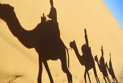 Caravane (Alex L'aventurier,) Tags: maroc morocco desert désert ergchebbi sahara shadow ombre sand sable camel chameaux people personne sky ciel bleu blue caravane