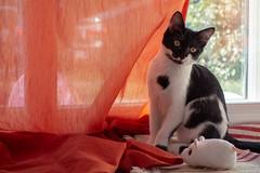 Franck-Barske-08068.jpg (franck_barske) Tags: vacances france concepts verspontdugard chat compagnie mignon languedocroussillon voyages animaux gard