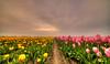 They're not on speaking terms anymore. (Alex-de-Haas) Tags: 11mm adobe blackstone d850 dutch hdr holland irix irix11mm irixblackstone lightroom nederland nederlands netherlands nikon nikond850 noordholland oudesluis photomatix photomatixpro schagerbrug beautiful beauty bloem bloemen bloementeelt bloemenvelden cloud clouds cloudscape drama dramatic floriculture flower flowerfields flowers landscape landschaft landschap lente lucht mooi nature natuur polder skies sky skyscape spectaculair spectacular spring sun sundown sunset tulip tulips tulp tulpen wolk wolken zonsondergang