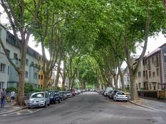 Green street (sander_sloots) Tags: street straat bomen trees platanen cars autos mannheim huizen houses lane laan strasse bäume lantaarnpalen lampposts aeg koffer70 armatuur lanterns lampadaires meerwiesenstrase