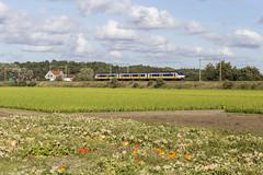 Pompoenentijd (Tim Boric) Tags: hillegom trein train zug bahn spoorwegen railways ns sprinter sgm emu pompoen pumpkin