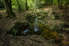 Woodland Stream (Dave Vowles) Tags: 2018 september shiningcliff woodland stream pond sunlit sunlight sunray foliage leafy shade shady trees water walk moment thoughts