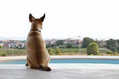 Pesca (CarloAlessioCozzolino) Tags: pesca cane dog