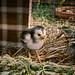 Pour un jardin bio, le meilleur des pesticides._DSC4220