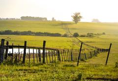 Aceguá (crismdl) Tags: acegua riograndedosul rs paisagem landscape rural field countryside interior brasil sul fronteira pampas pampa