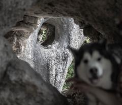 Cave dog (raymond_zoller) Tags: canon hund höhle lightroom steine caverne chien dog stones камни пес пещера собака canonef70200mmf28lusm canon70200f28l